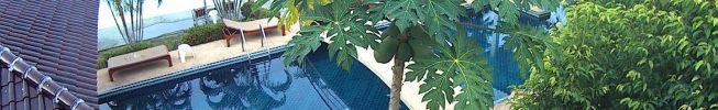Papaya i vår trädgård