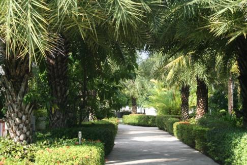 Trädgården och vägen till husen och poolen, tennisbanan