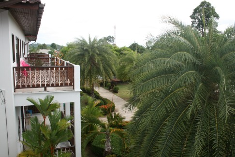 Från terrassen mot pool och trädgård