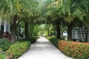 Trädgården på CET och gångvägen till husen